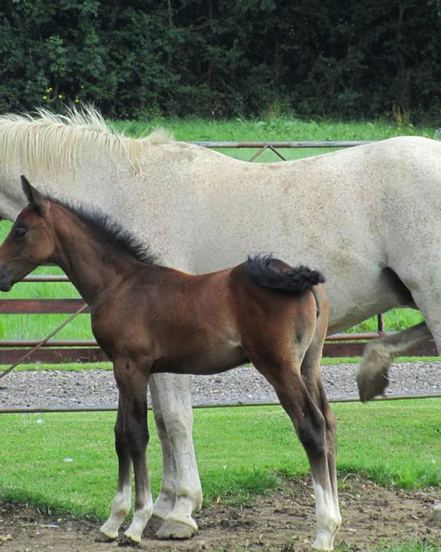 A Horse And Foal.