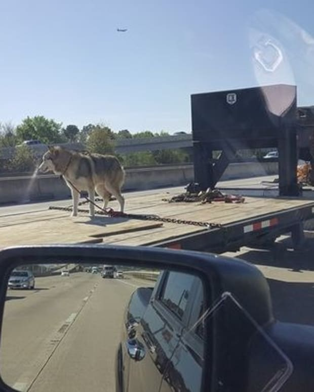 Photo Of Dog Chained To Truck Bed Sparks Outrage (Video) Promo Image