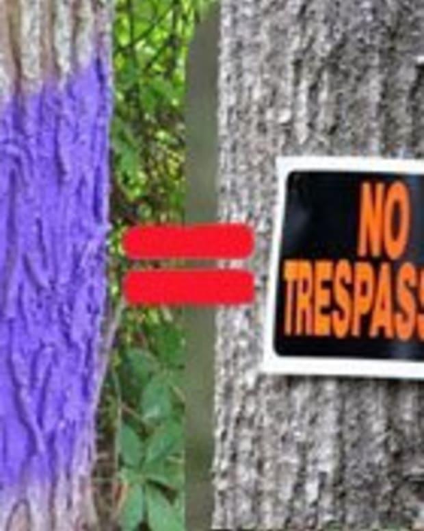 purple paint on tree
