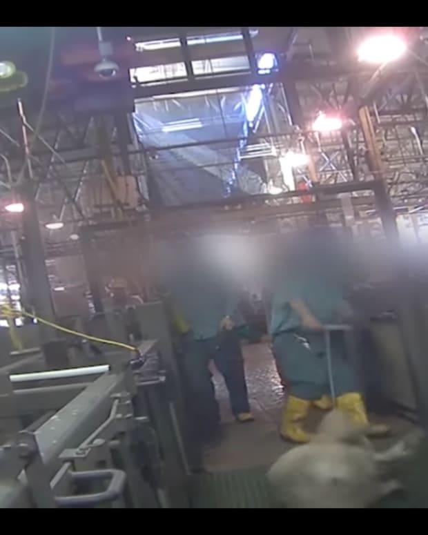 QPP Video Screenshot.