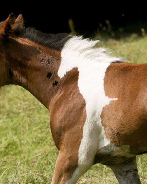 horsepattern.jpg