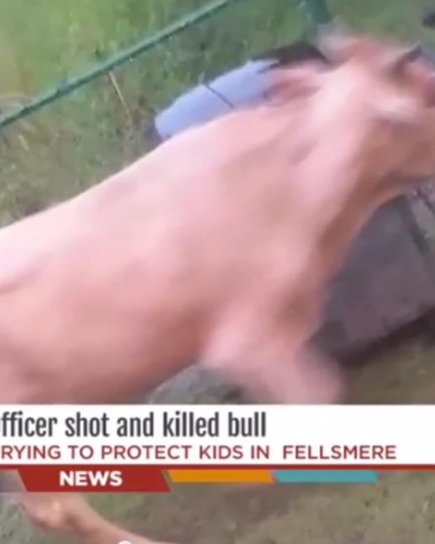 bullshooting_featured.jpg