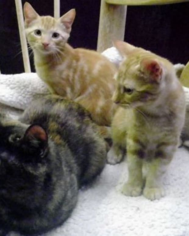 abandoned kittens found in box