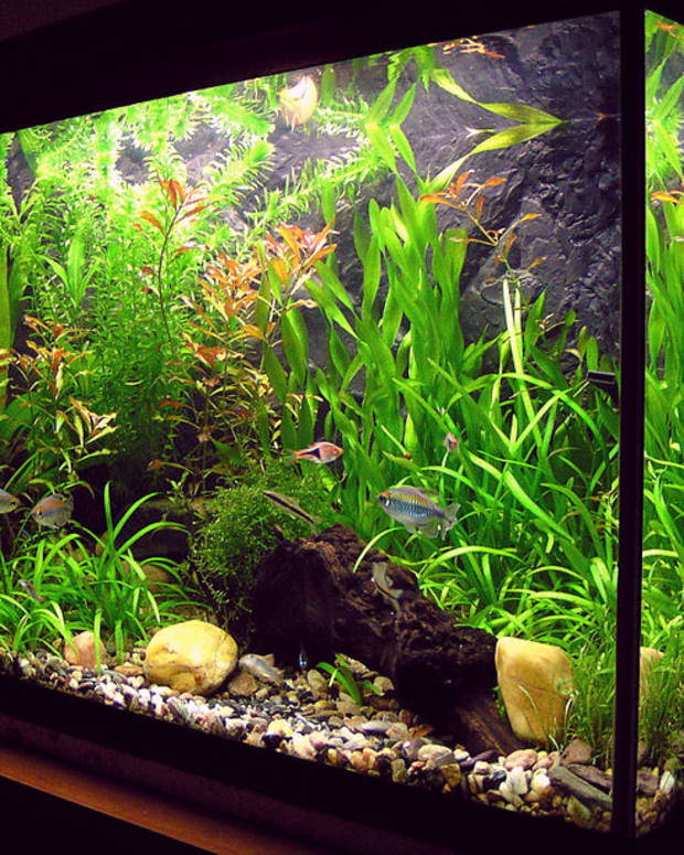 aquarium.jpeg