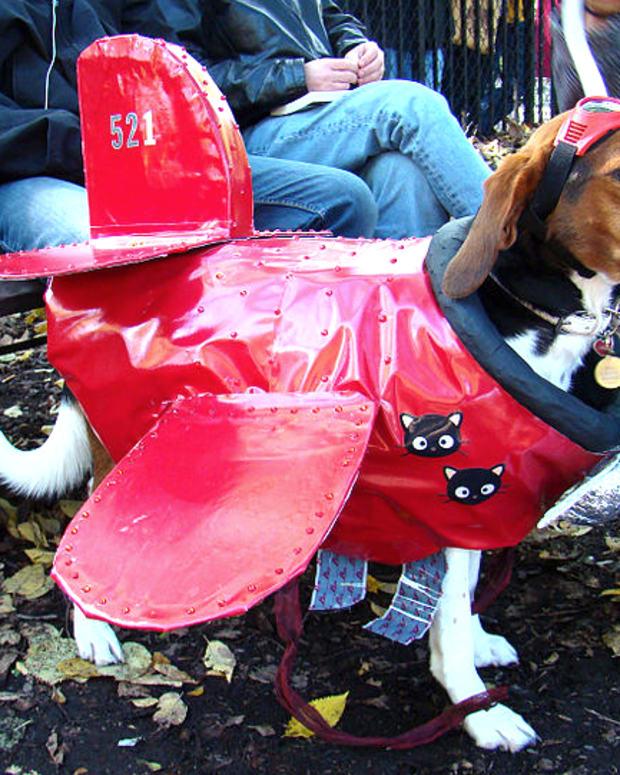 Dog Dressed As Plane.