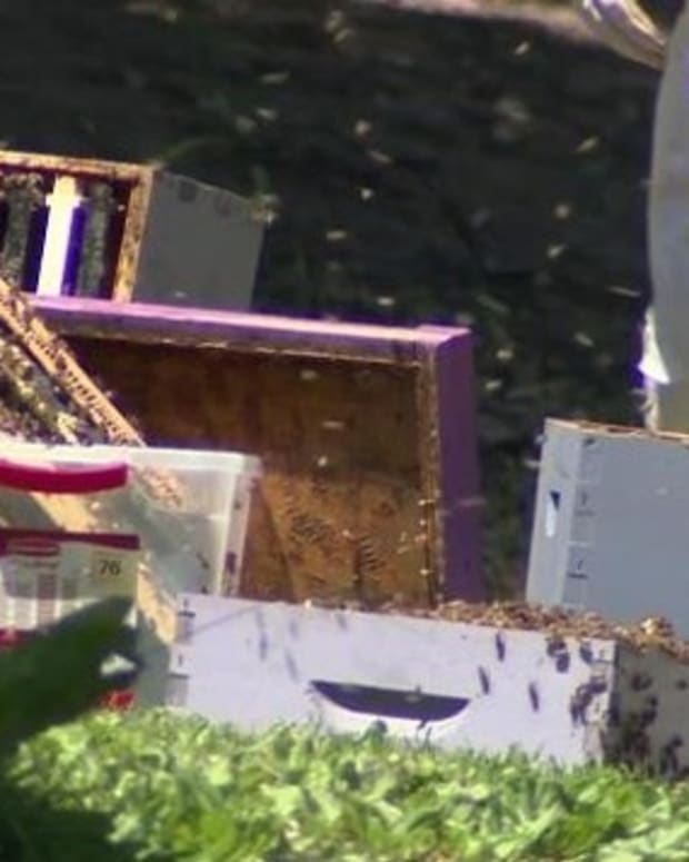 Police Say Someone Put Beehives In Car's Trunk (Video) Promo Image