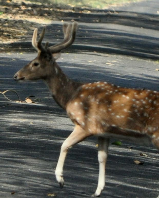 Deer Crossing Sign Causes Controversy In Iowa (Photo) Promo Image