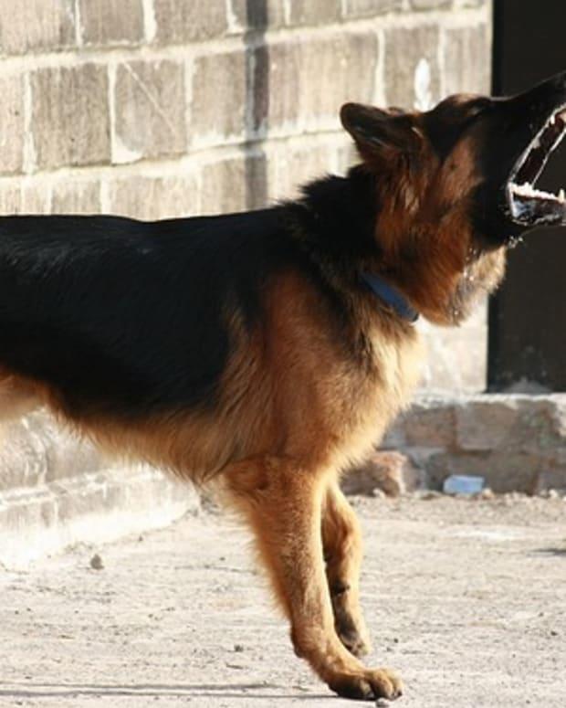 dogbarking1.jpg
