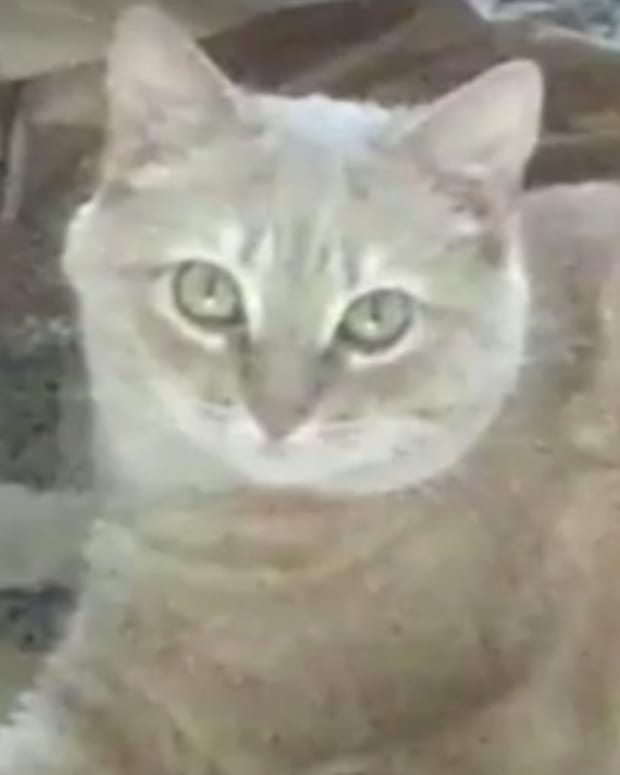 Policeman Shoots Injured Cat, Outrage Follows (Video) Promo Image