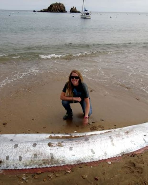 Oarfish, Catalina Island.