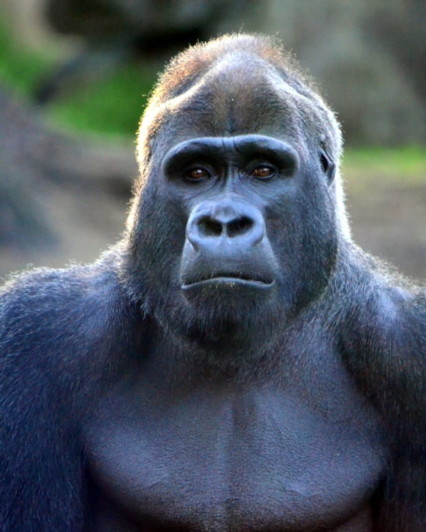 Family Of Boy Who Fell Into Gorilla Pen Thanks Zoo Promo Image