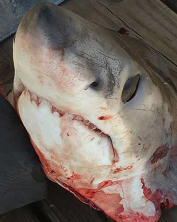 Photos Of Mutilated Shark Spark Outrage, Investigation Promo Image