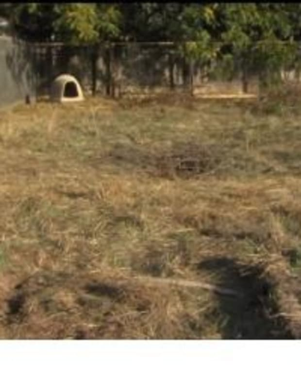 Family Makes Upsetting Discovery In Backyard Of Their New Home (Photos) Promo Image