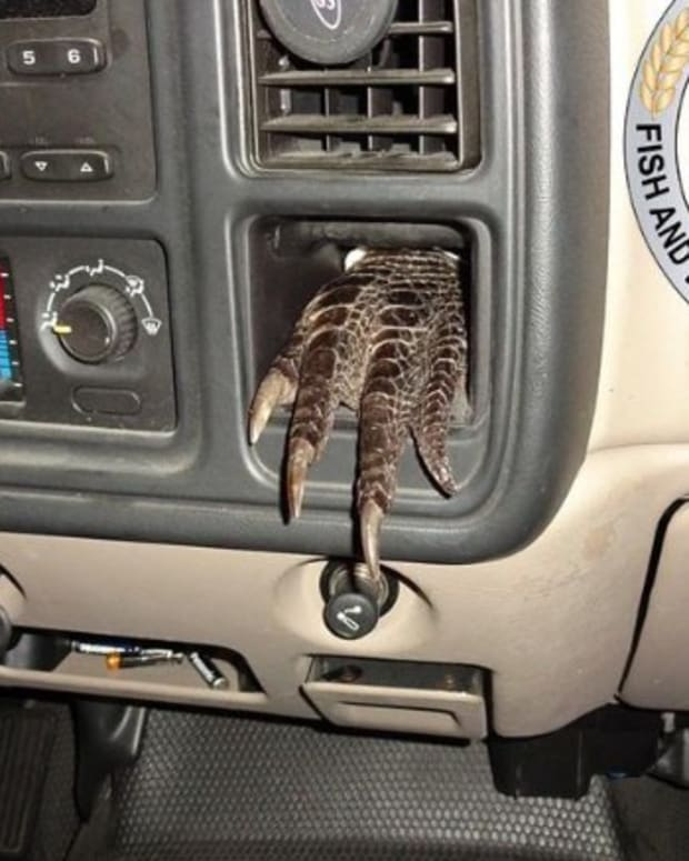 Officers Stop Truck, Find Alligator Parts Inside Promo Image