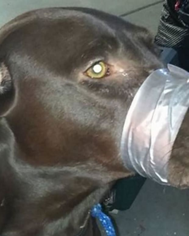 Woman Who Taped Dog's Mouth Shut Learns Fate Promo Image