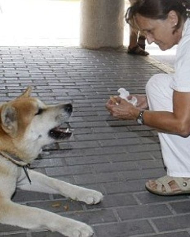 Loyal Dog Refuses To Leave Owner At Hospital Promo Image