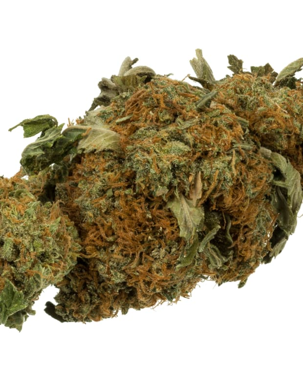 Arkansas Court OKs Medical Marijuana Referendum Promo Image