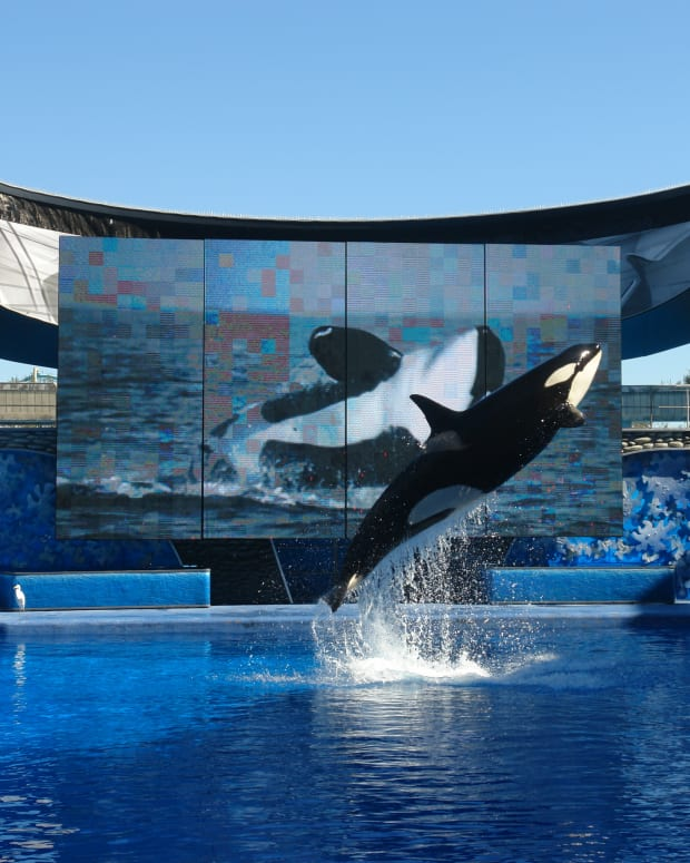 SeaWorld Shares Plummet To Record Low Promo Image