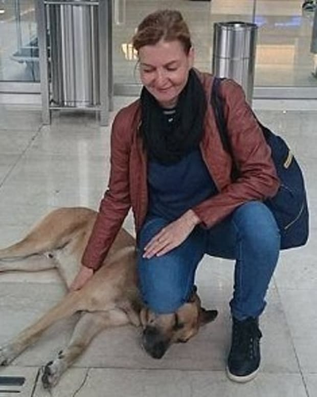 Flight Attendant Adopts Stray Dog (Photos) Promo Image