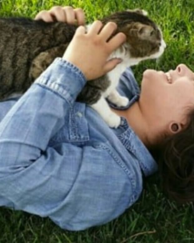 Young Woman Killed While Trying To Save Injured Kitten  Promo Image