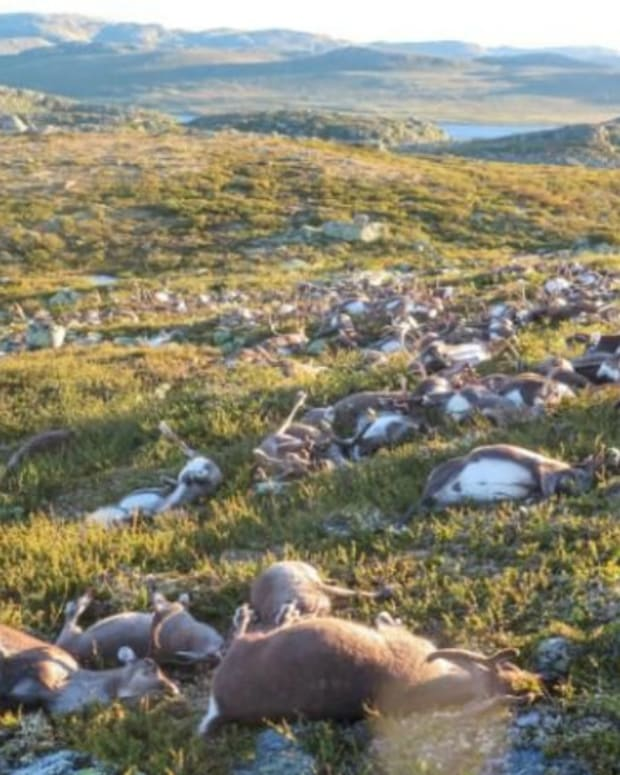 Another Herd Of Animals Killed By Lightning (Photos) Promo Image