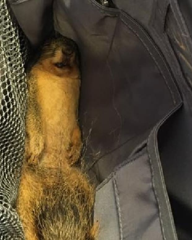 Student Brings Dead Squirrel To Class, Wants To Eat It Promo Image
