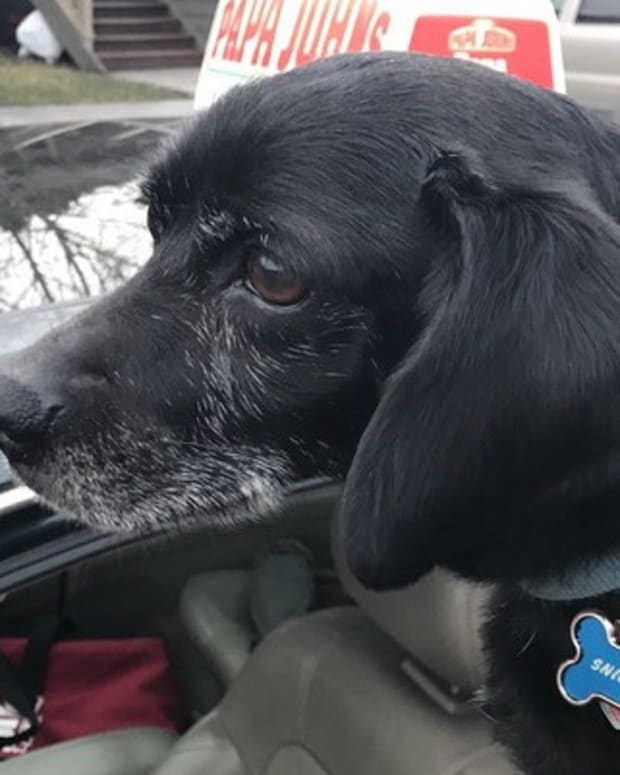 Pizza Delivery Driver Takes Lost Dog Home Promo Image
