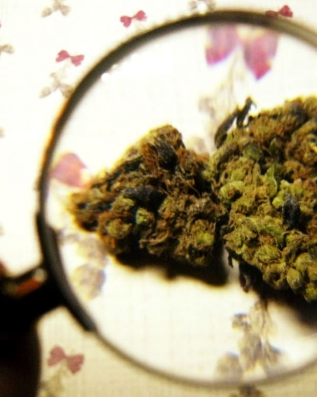 More Arrests For Marijuana Use Than All Violent Crimes Promo Image