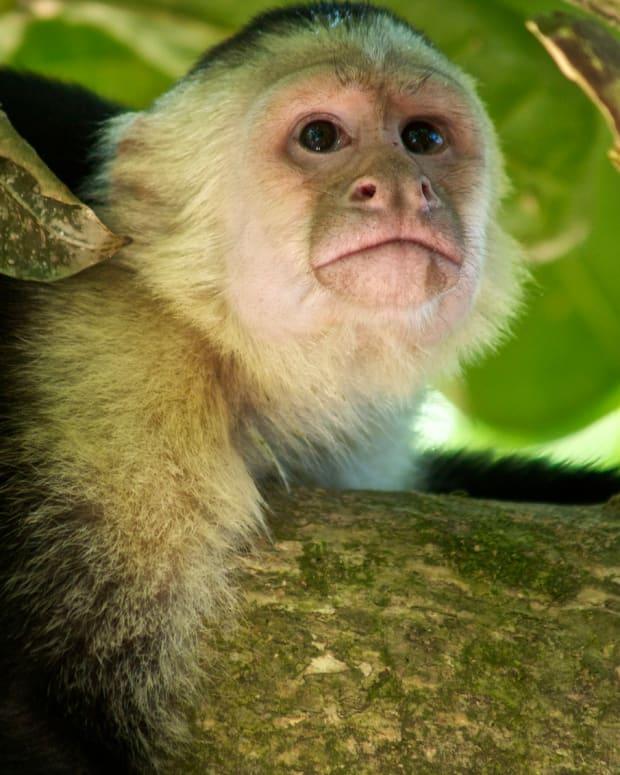 'Mowgli Girl' Raised By Monkeys Found In India Promo Image