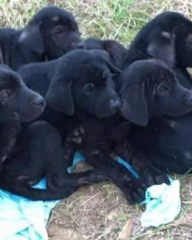 Police Arrest Man For Allegedly Shooting Five Puppies Promo Image