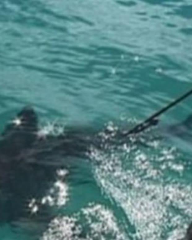 Scientists On The Hunt For 'Super-Predator' That Ate 9-Foot-Long Shark (Video) Promo Image
