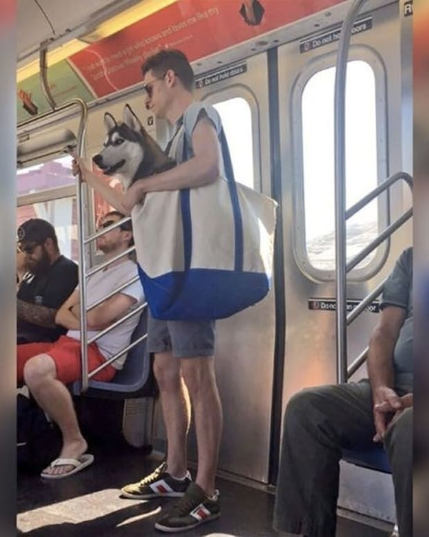 New Yorkers Are Carrying Their Dogs In Totes (Photos)) Promo Image