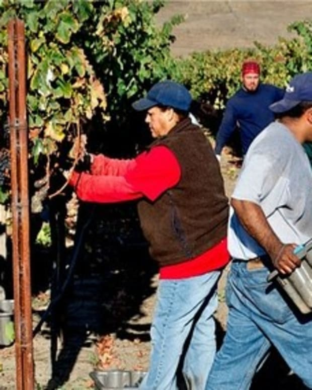 Trump Winery Seeking Foreign Workers Promo Image
