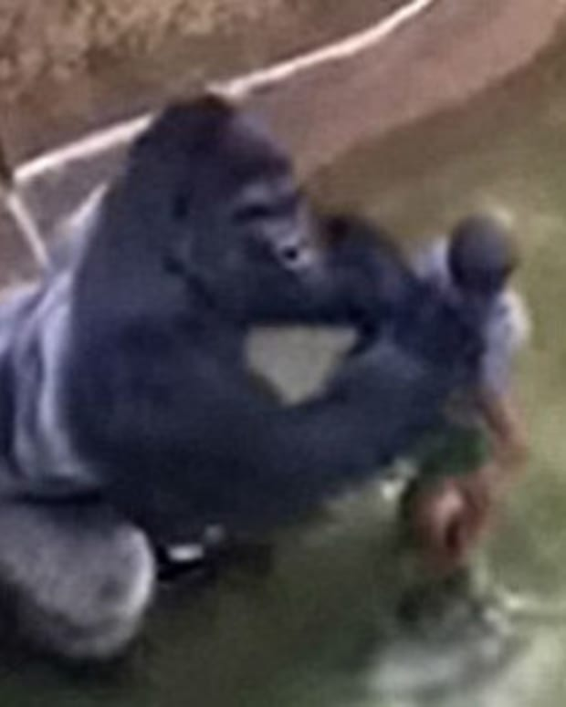 Grandma Of Boy Who Fell In With Harambe Makes Surprising Admission Promo Image
