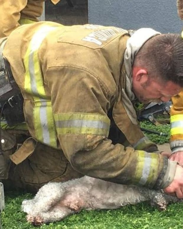 Firefighter Resuscitates Dog With CPR After Rescue (Video) Promo Image