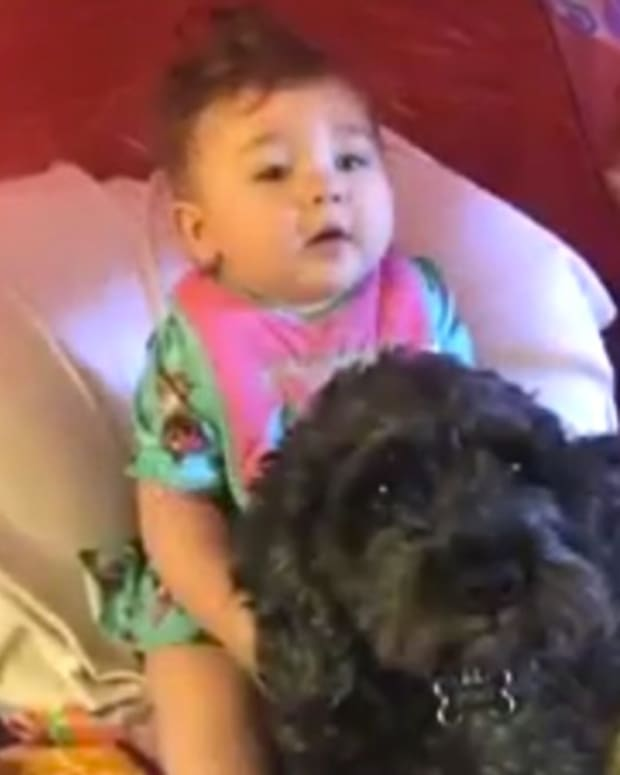 Dog Dies After Shielding Baby In Home Fire (Video) Promo Image