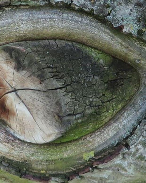 Remote Village Worships One-Eyed 'Cyclops' Goat (Photos) Promo Image