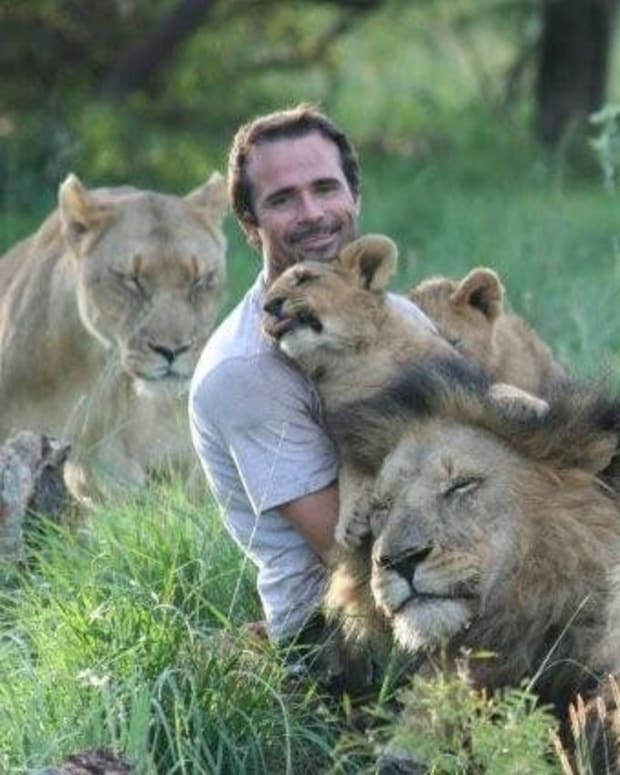 Lioness Trusts Man With Her Newborn Cubs (Video) Promo Image