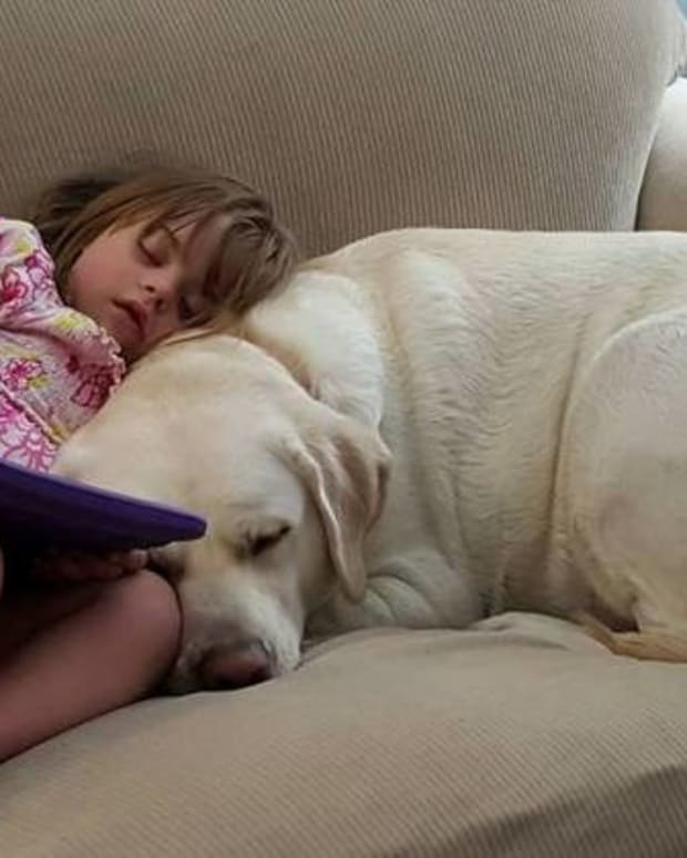 Alert Dog Saves Diabetic Girl Five Miles Away (Video) Promo Image