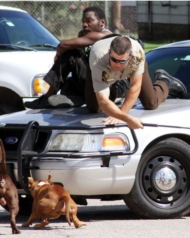 Man And Officer Seek Shelter From Pit Bulls (Photo) Promo Image