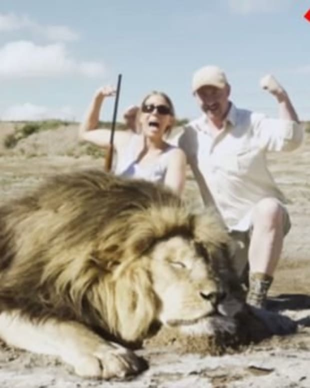 Lion Gets Revenge On Trophy Hunters (Video) Promo Image
