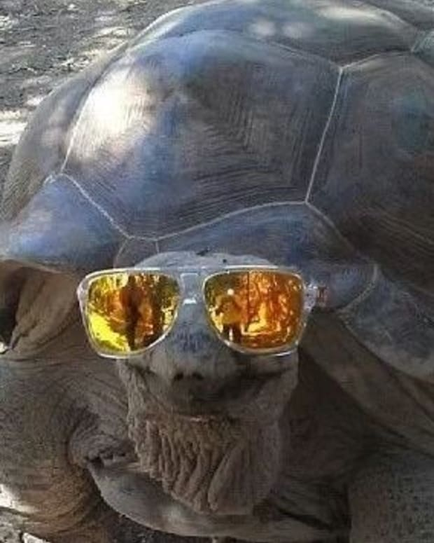 Photo Of Girl Riding Tortoise Stirs Controversy (Photo) Promo Image