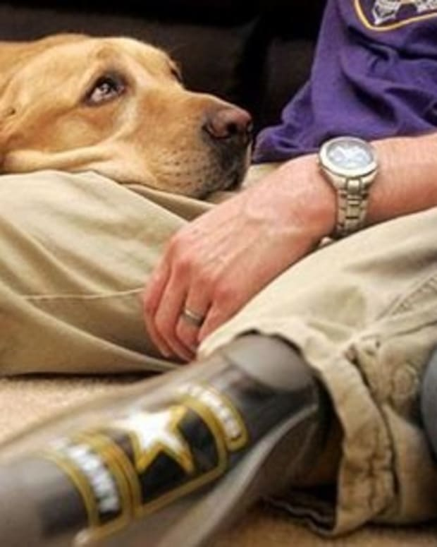 Service Dog Calms Veteran's PTSD Attack (Video) Promo Image