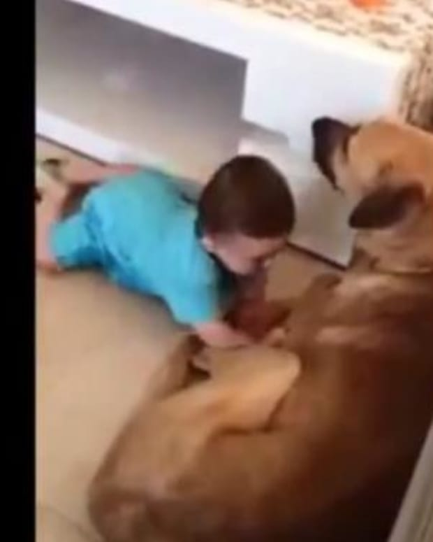 Baby Pays The Price After Parents Let Her Poke Dog's Face (Video) Promo Image