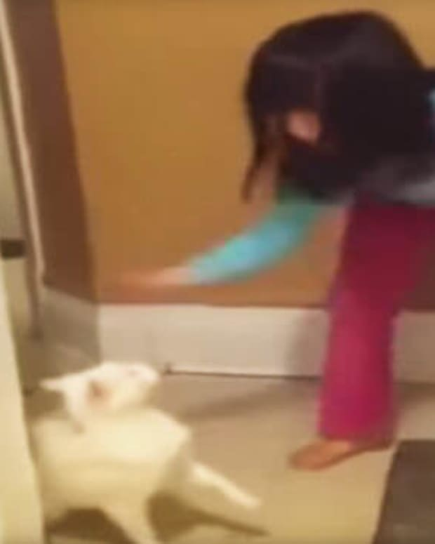 Little Girl Hits Cat, Learns Her Lesson (Video) Promo Image
