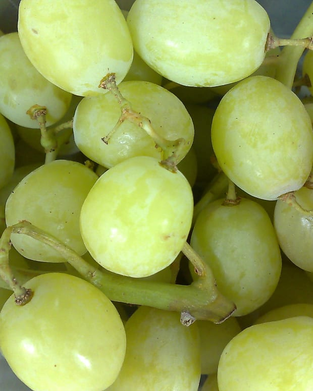Post Reminds Parents Grapes Are A Choking Hazard (Photo) Promo Image
