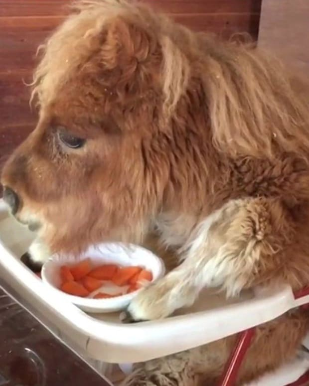 Farm Sparks Outrage With Clip Of Horse In High Chair (Video) Promo Image