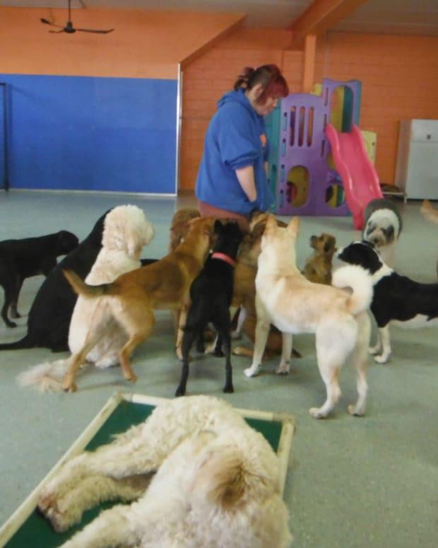 Man Saw His Dog Abused On Dog Day Care Webcam Promo Image