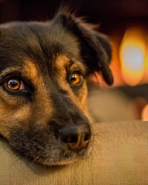 Man Caught Roasting Dog Over Fire (Photos) Promo Image