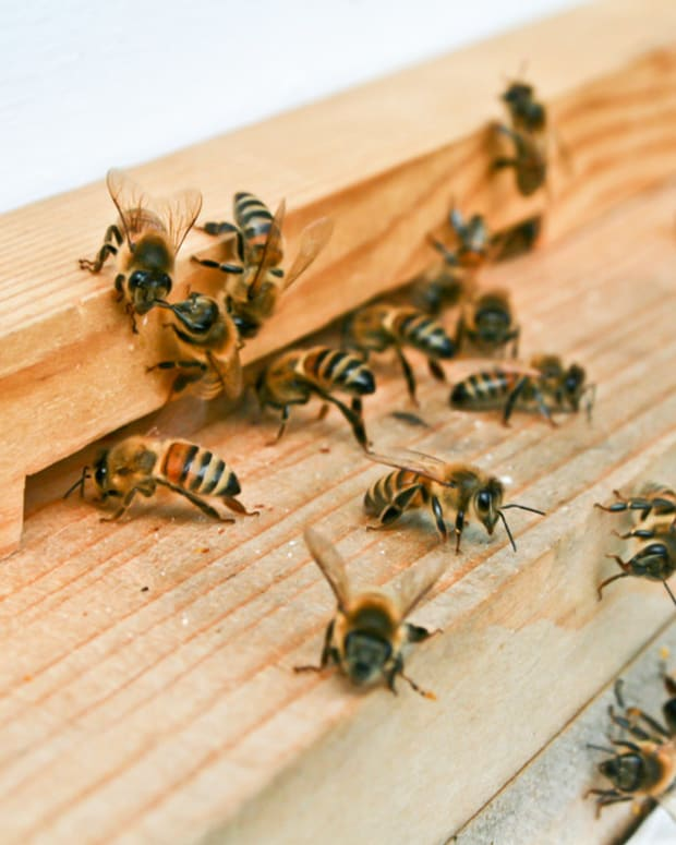 Woman Finds 35,000 Bees Living In Her Ceiling (Photos) Promo Image